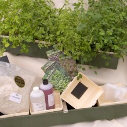 herb and salad kit